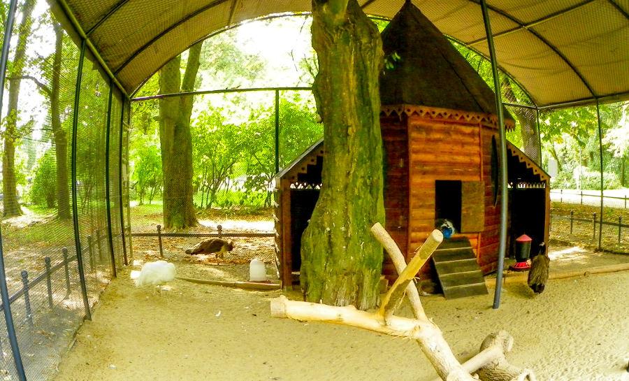 Woliera dla pawi w Ogrodzie Saskim